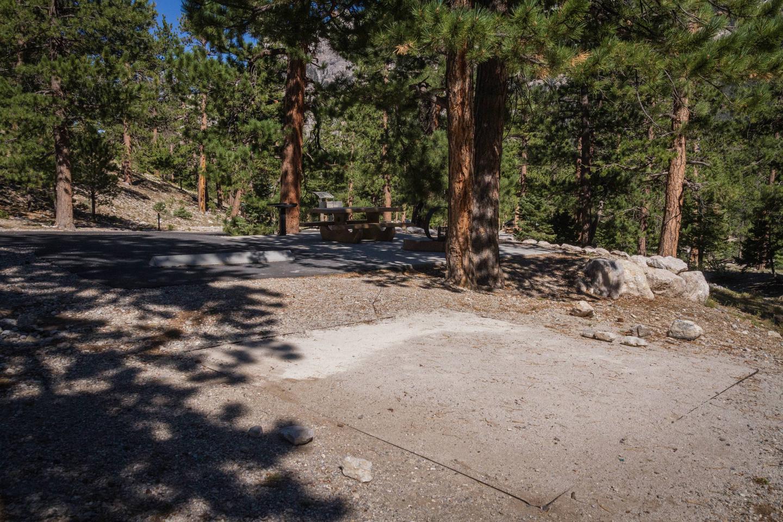 Site 39Site 39 tent pad