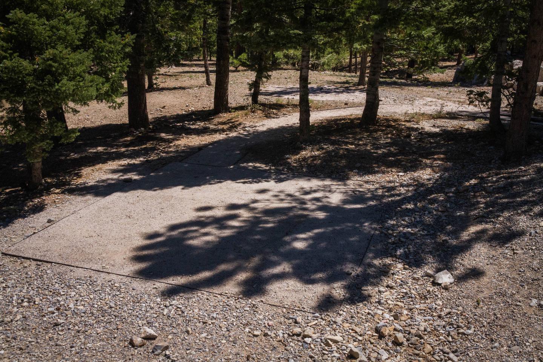 Site 58Site 58 tent pad