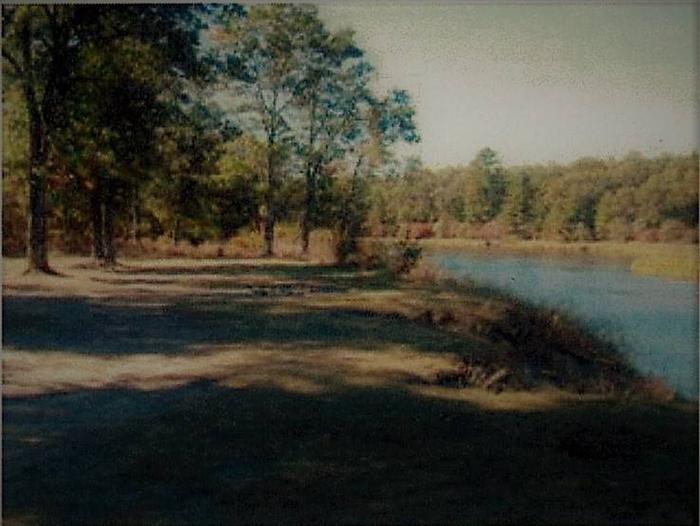 Alcona pond  Site 2