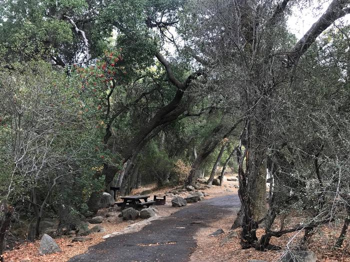 Wheeler Gorge Site 18