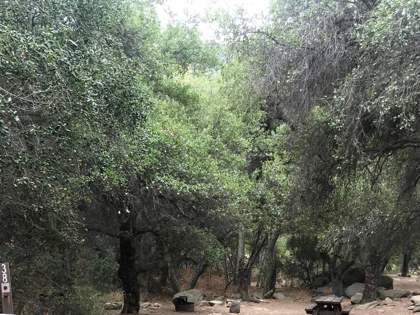 Wheeler Gorge Site 38