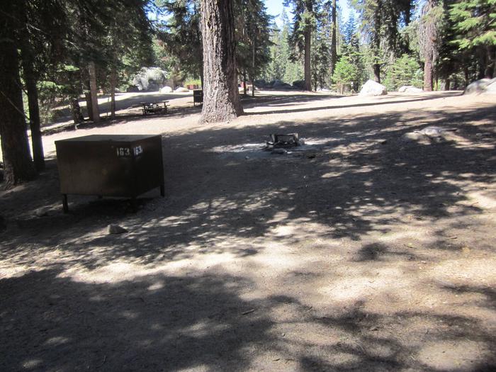 Site 163, shady, near meadow