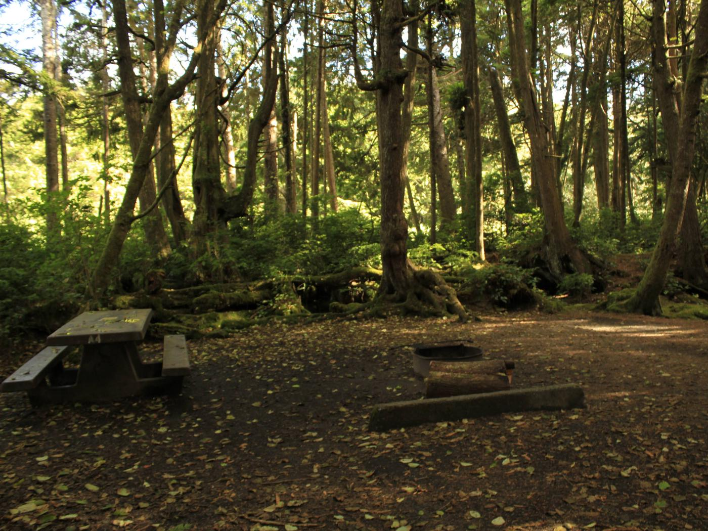 Picture of campsite with picnic table and fire pit. Campsite A4.