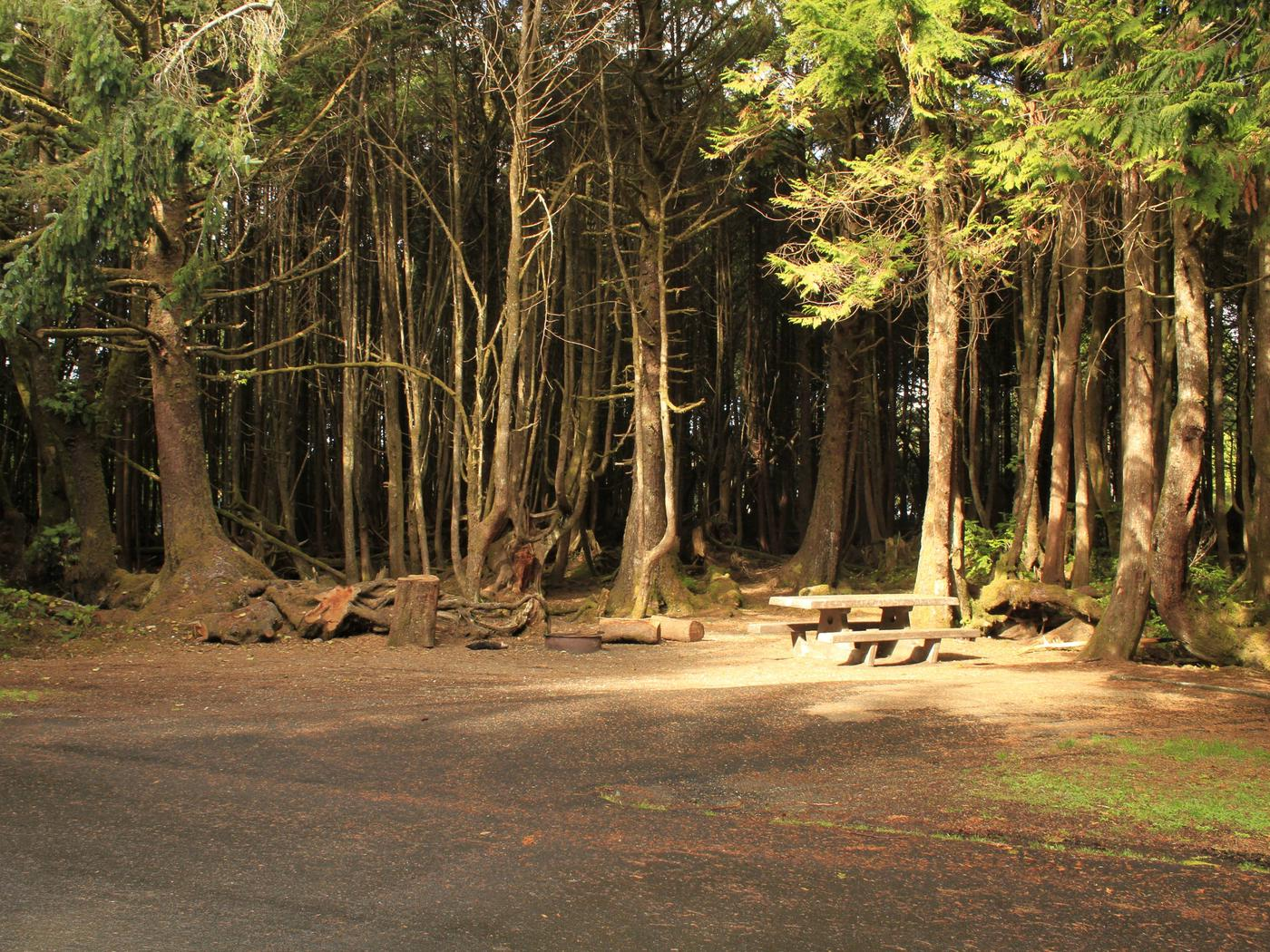 Picture of campsite with picnic tableCampsite A7