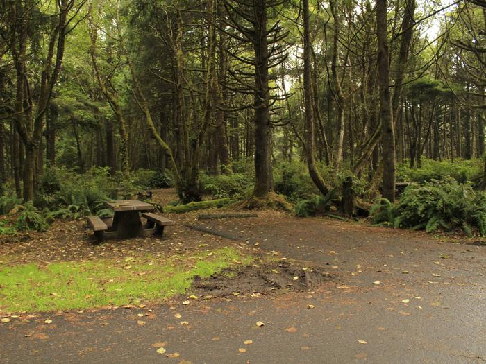 Picture of campsite with picnic tableCampsite A8