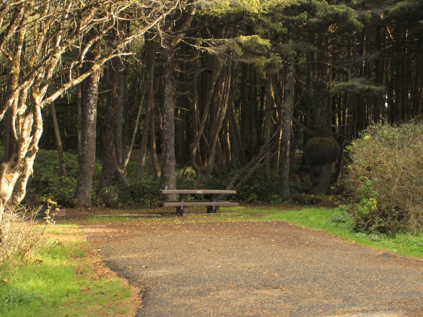 Picture of campsite with picnic tableCampsite A24