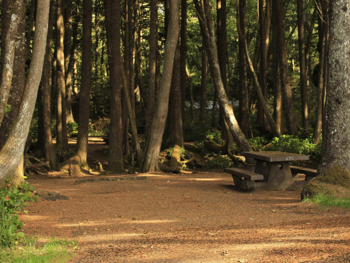 Picture of campsite with picnic tableCampsite A30