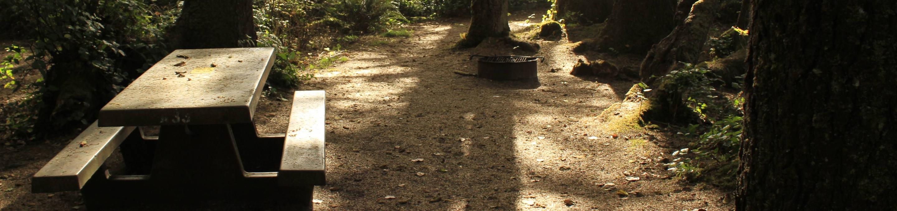Picture of campsite with picnic tableCampsite A33