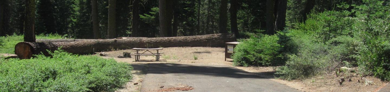 Site 55, Partial Shade, Near Creek