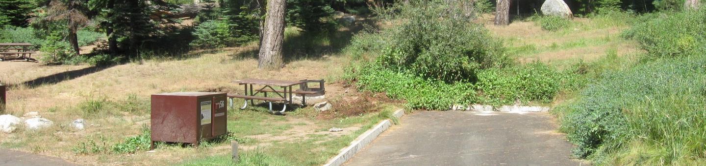 Site 56, Sunny, Near Creek