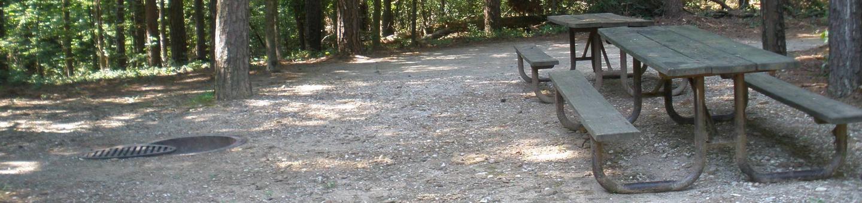 Dogwood Site 29