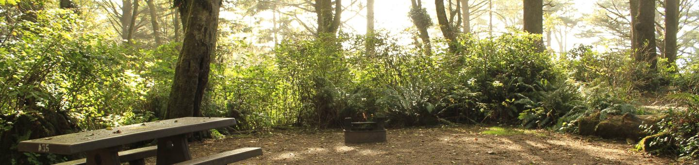 Picture of campsite with picnic table and trees. Campsite A35