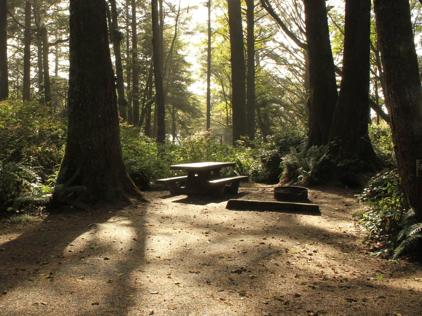 Picture of campsite with picnic table and trees. Campsite A37