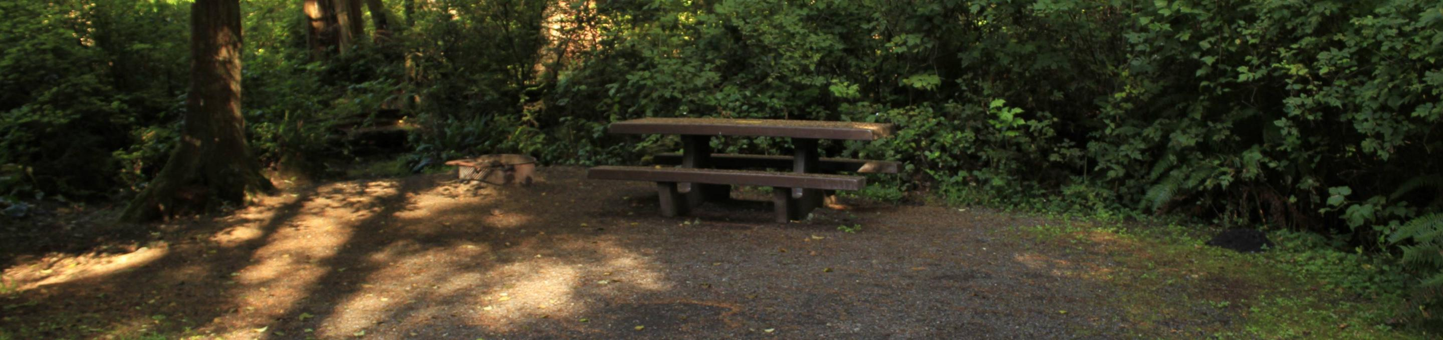 Picture of campsite with picnic tableCampsite A48