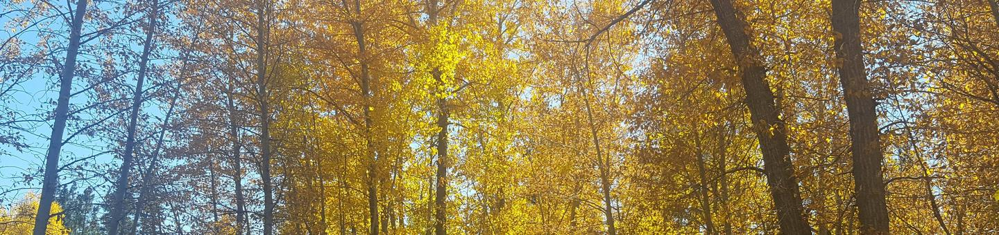Fall Colors near Sierra Campground