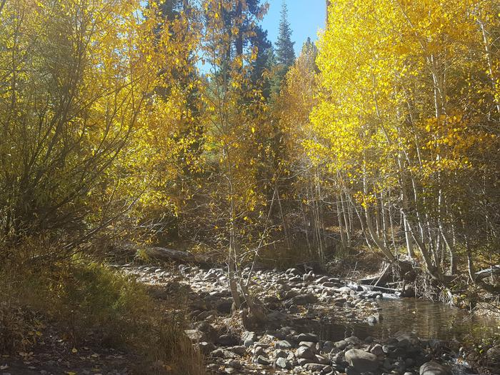 Fall Colors, North Fork Yuba River at Sierra