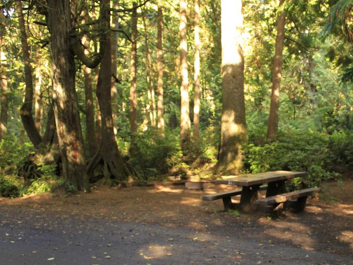 Picture of campsite with picnic tableCampsite A63