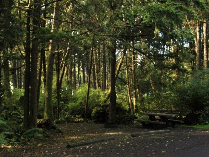 Picture of campsite with picnic table. Campsite A65