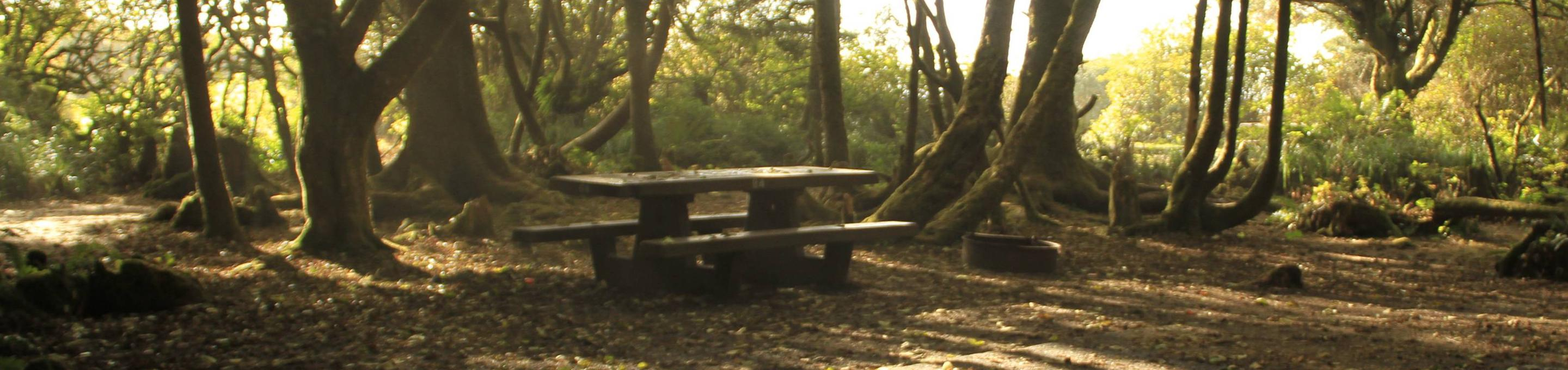 Picture of picnic table and campsite. Campsite B4