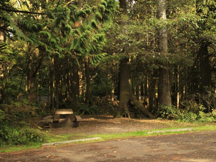 Picture of campsite with picnic table. Campsite B5