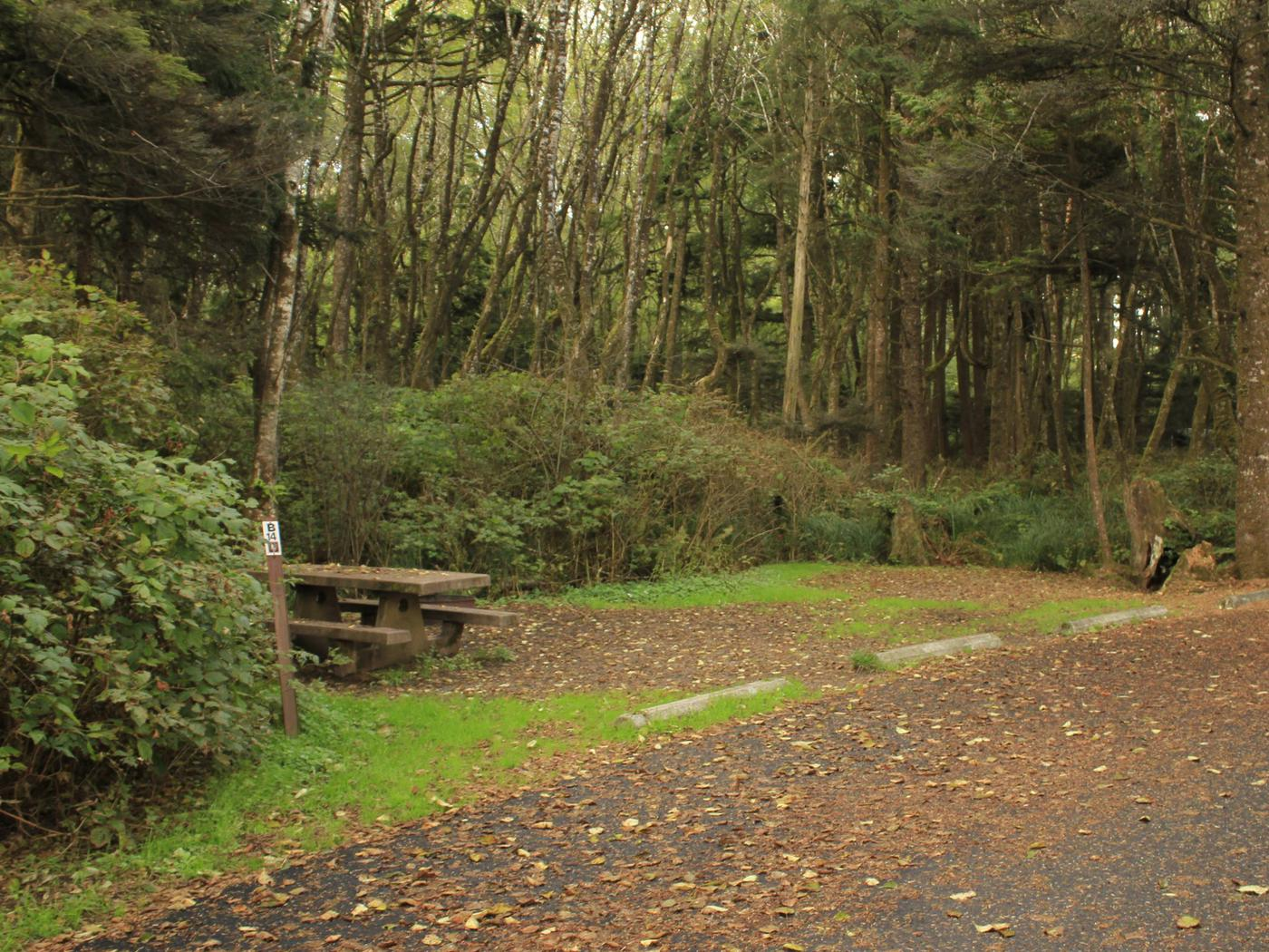 Picture of campsite and picnic tableCampsite B14
