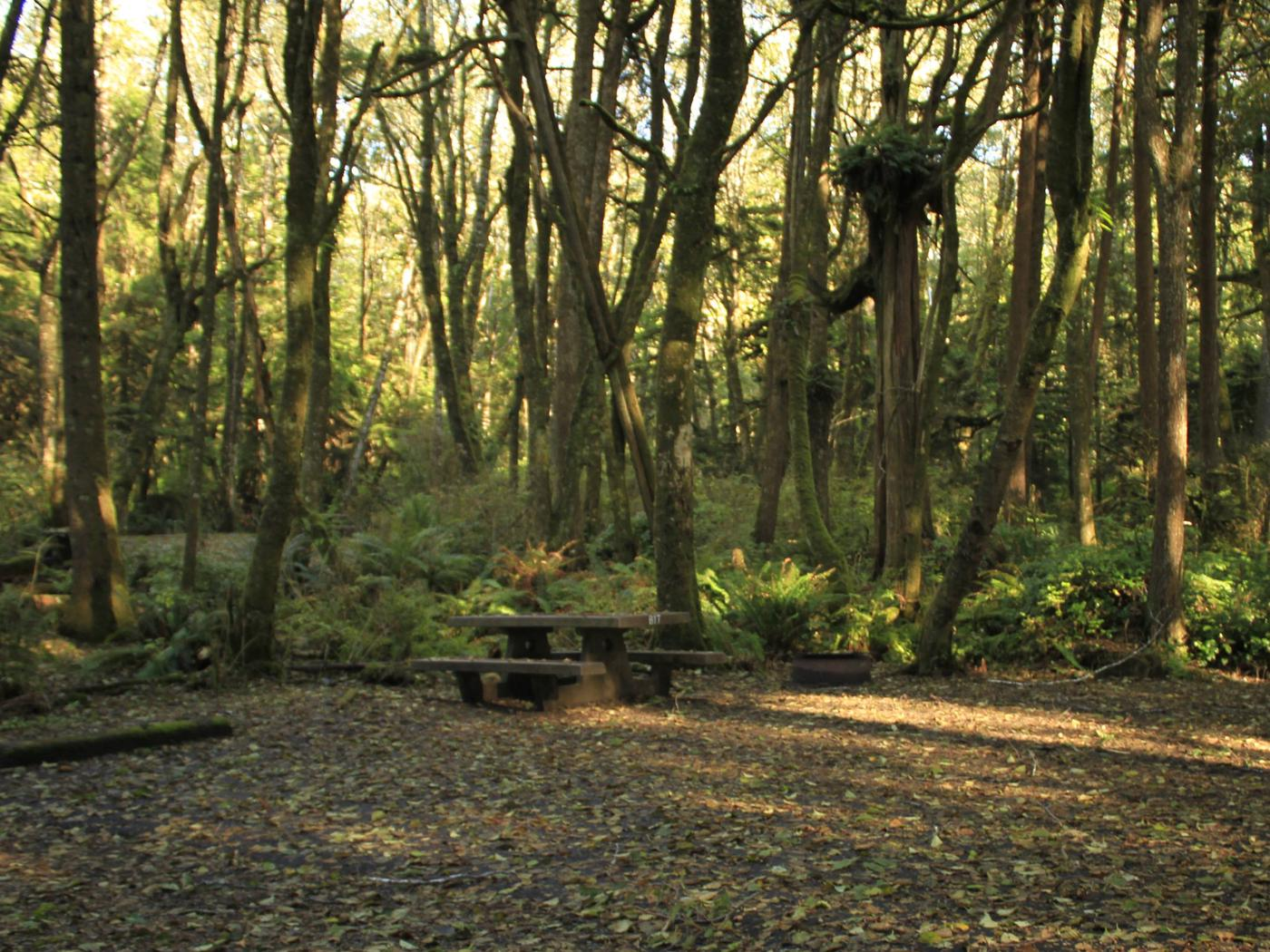 Picture of campsite and picnic table. Campsite B17