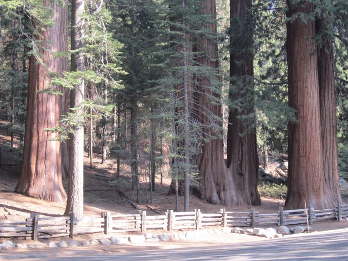 Dorst Creek Campground-Sequoia and Kings Canyon National