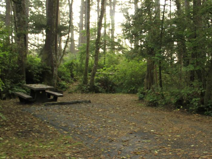 Picture of campsite with picnic tableCampsite C1