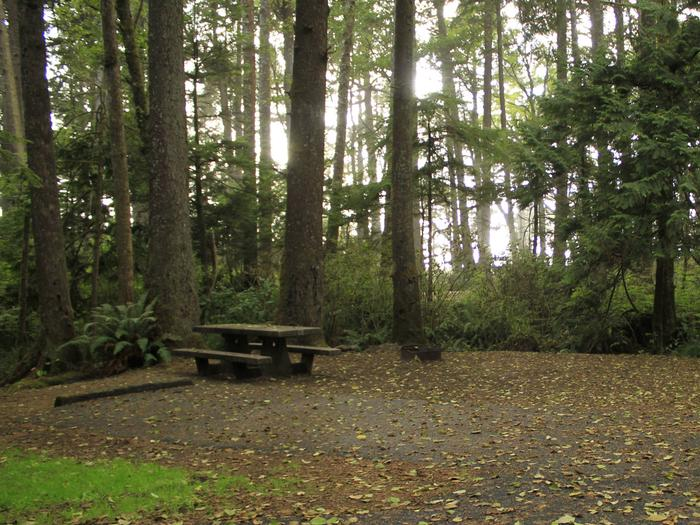 Picture of campsite with picnic tableCampsite C2