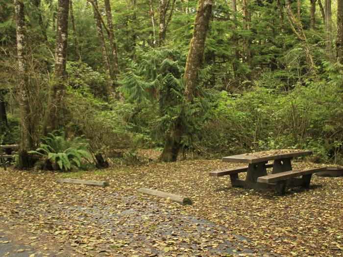 Picture of campsite with picnic tableCampsite C7