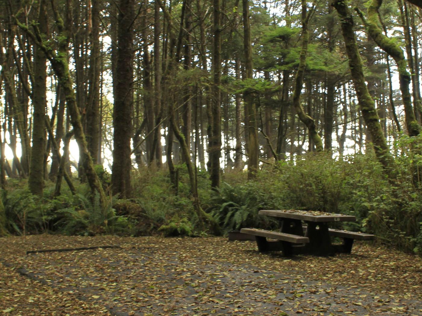 Picture of campsite with picnic tableCampsite C8