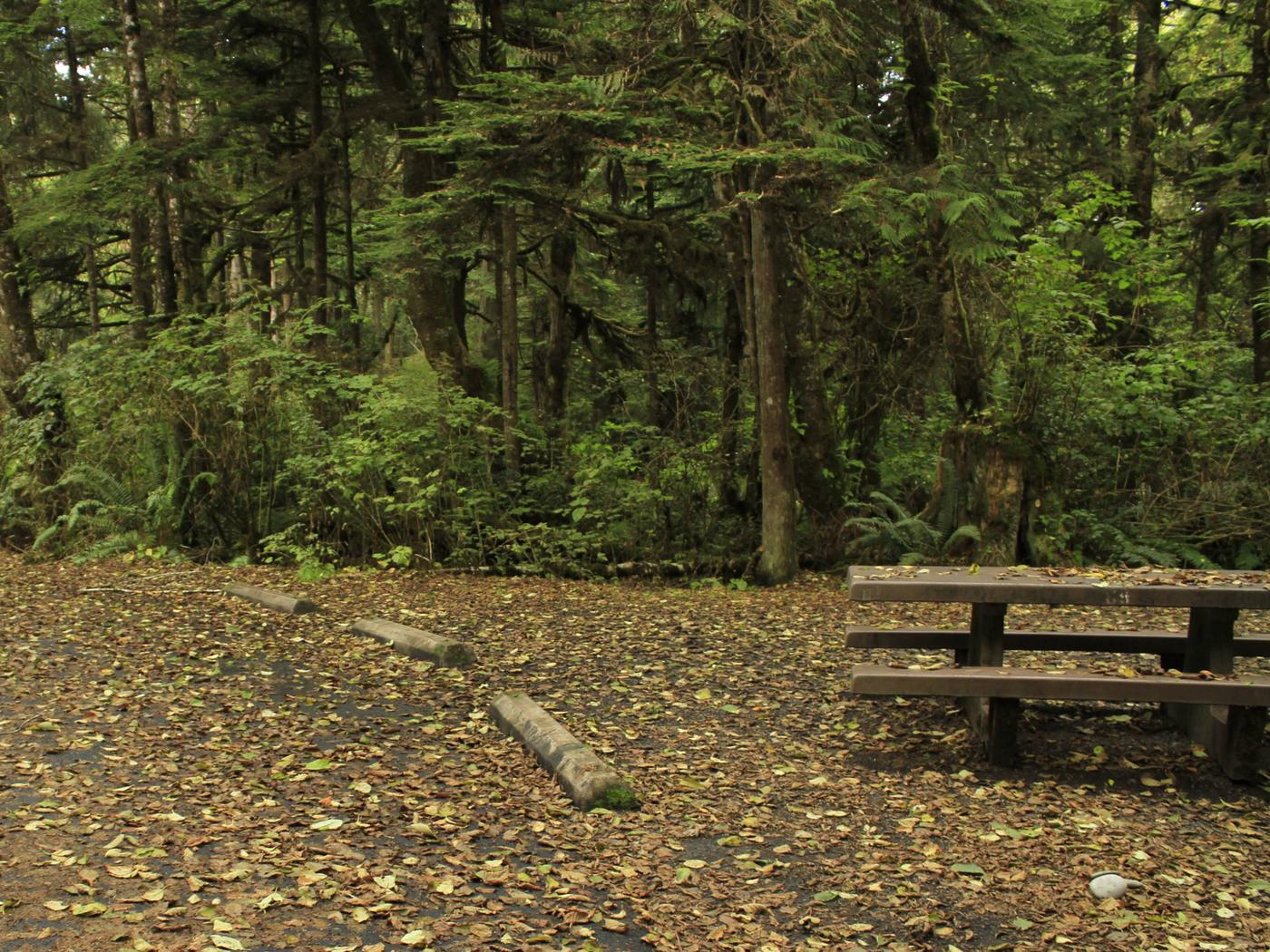 Picture of campsite with picnic tableCampsite C9