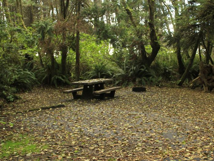 Picture of campsite with picnic table. Campsite C10