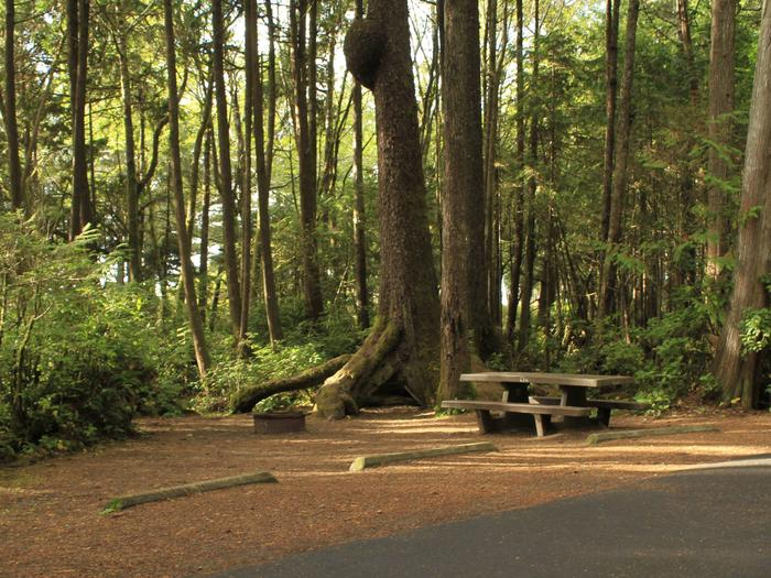 Picture of campsite with picnic tableCampsite C14
