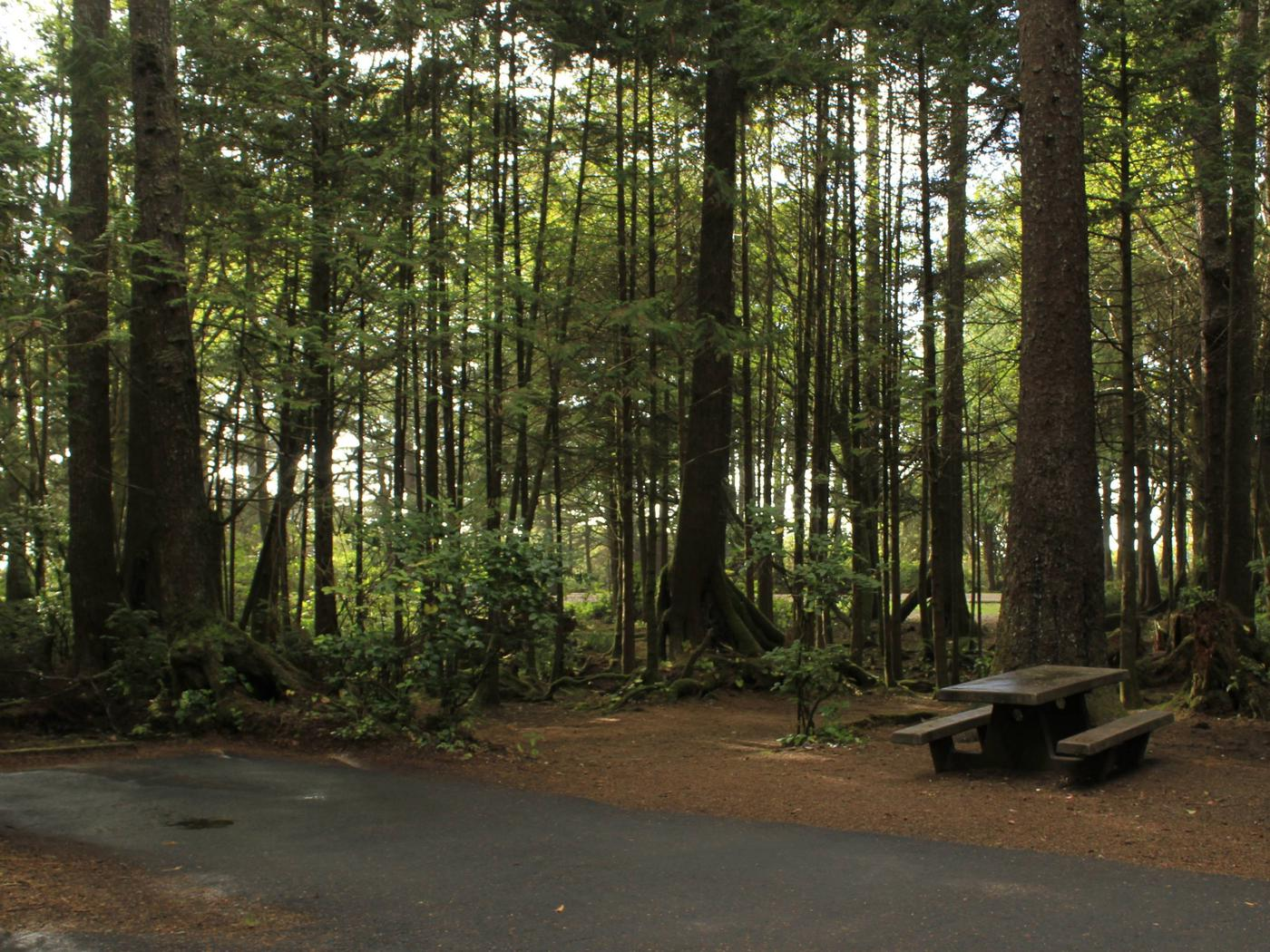 Picture of campsite with picnic tableCampsite C15