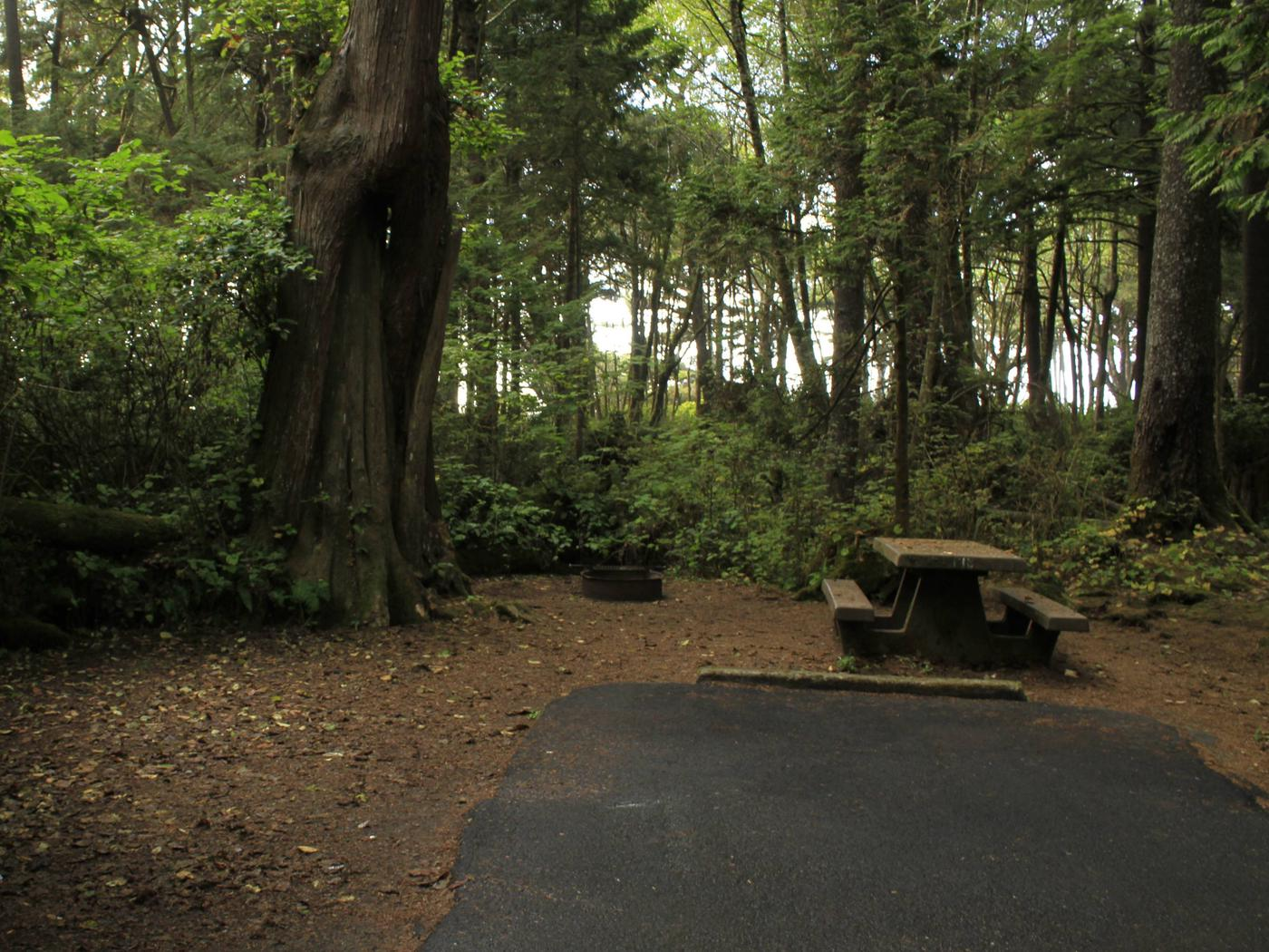 Picture of campsite with picnic tableCampsite C18