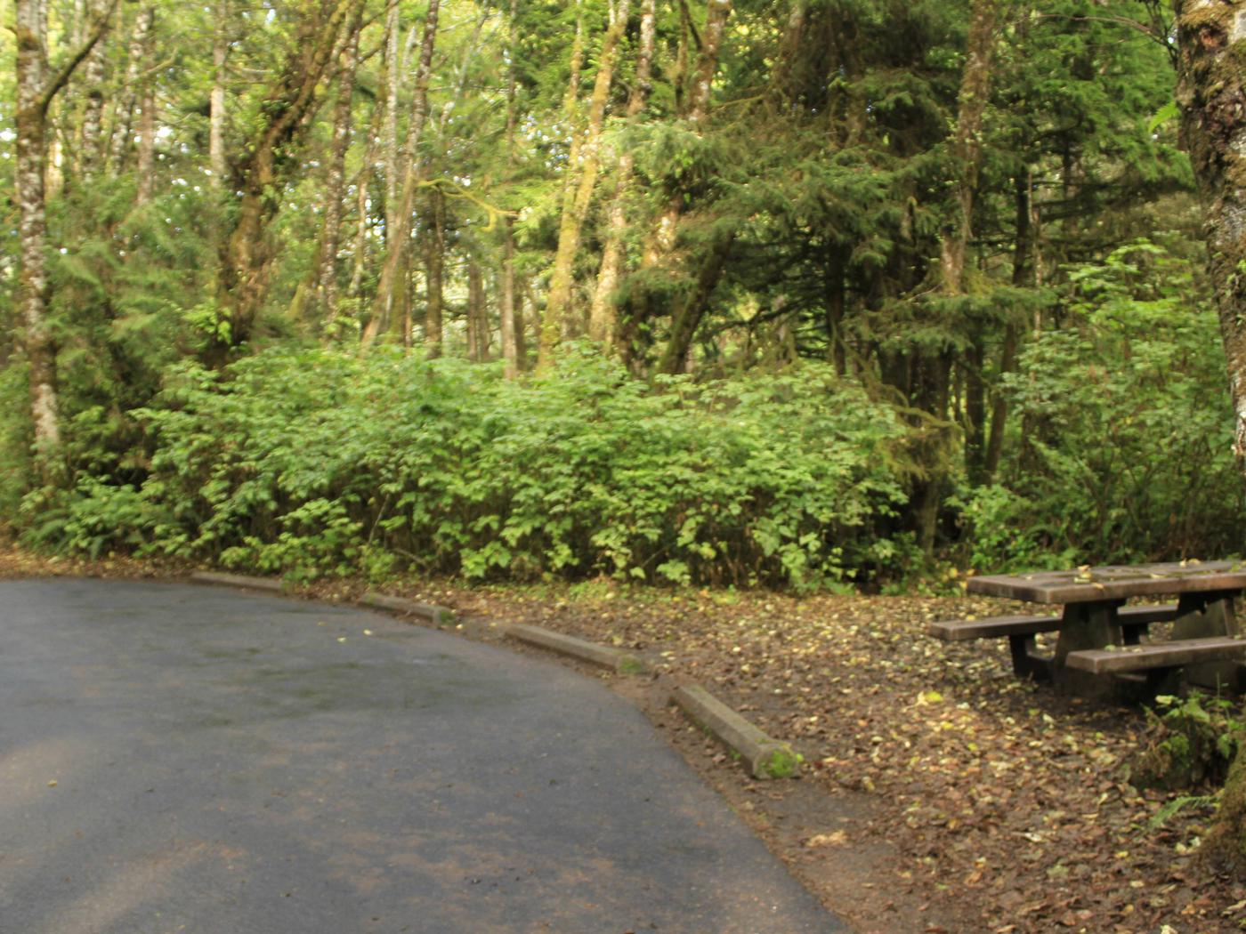 Picture of campsite with picnic tableCampsite C19