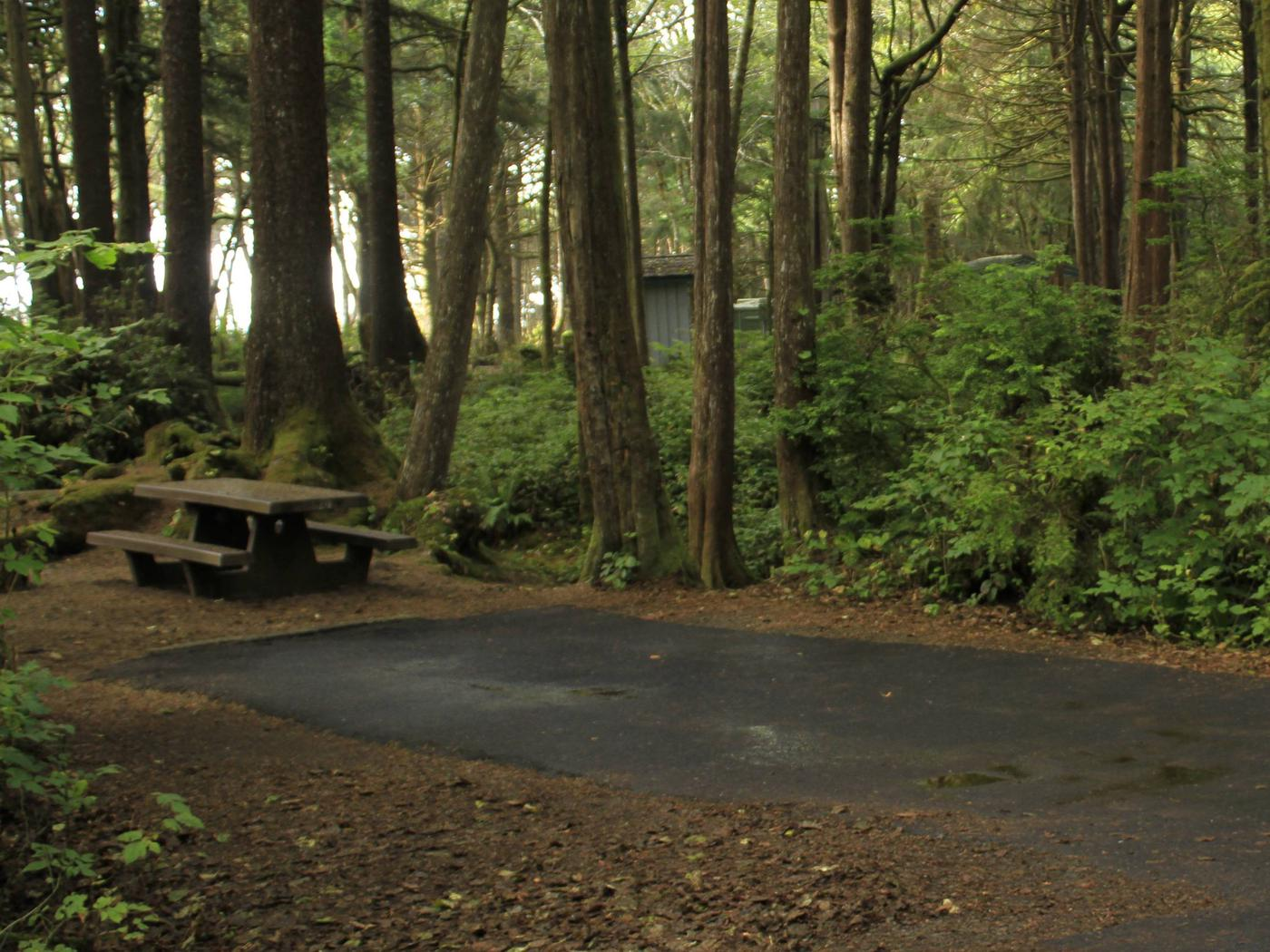 Picture of campsite with picnic tableCampsite C20