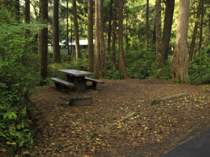 Picture of campsite with picnic tableCampsite C21