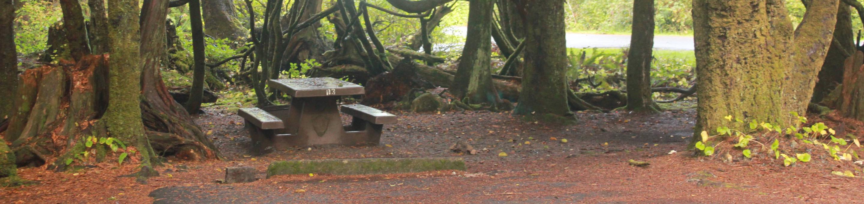 Picture of campsite with picnic table. Campsite D3