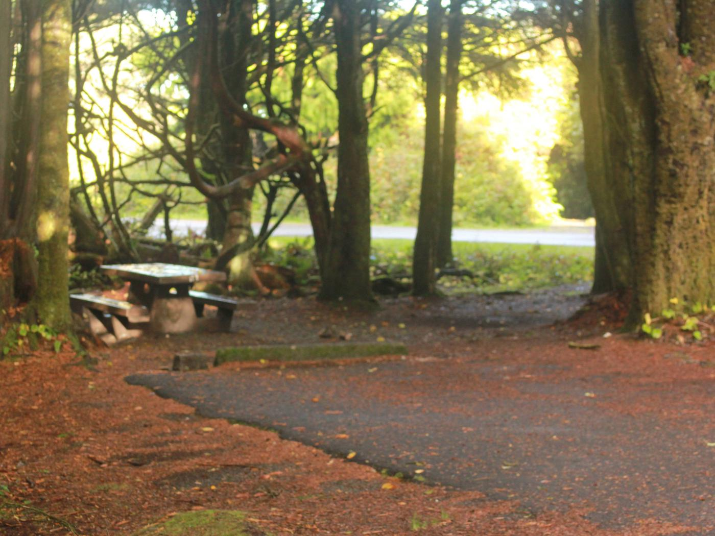 Picture of campsite with picnic tableCampsite D3