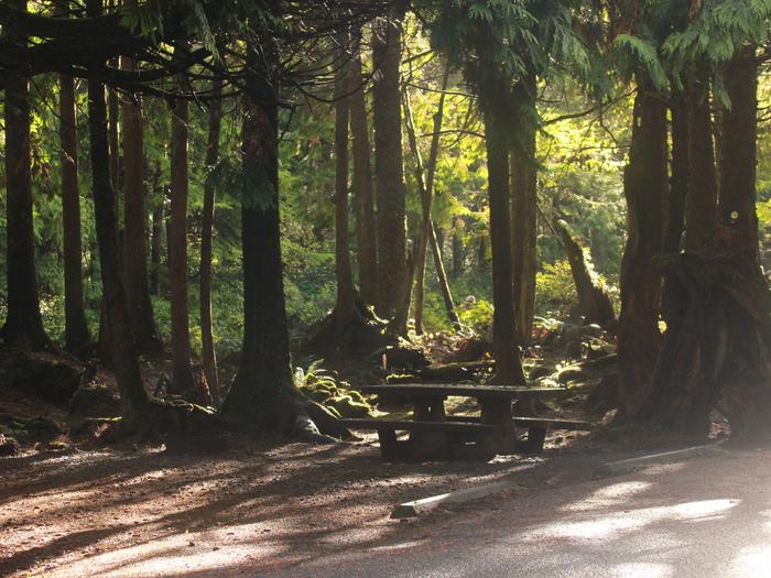 Picture of campsite with picnic tableCampsite D5