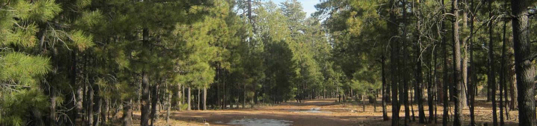 view of entrance to Black Canyon Rim CampgroundBlack Canyon Rim Campground