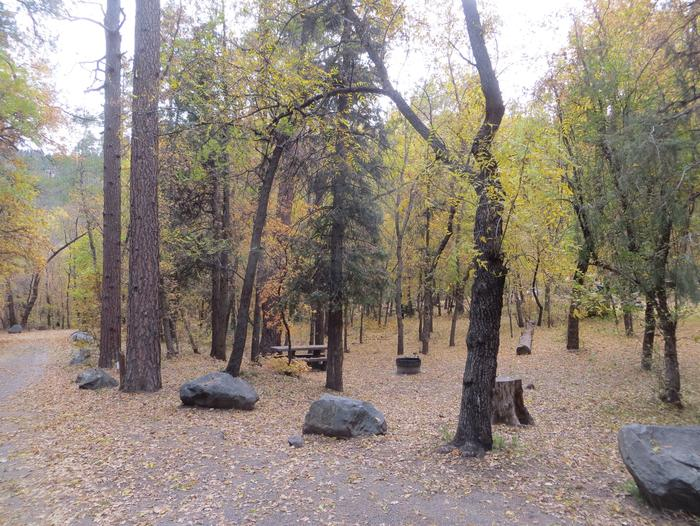 Cave Spring Campground Site #A12 featuring picnic table and fire pit among the trees.