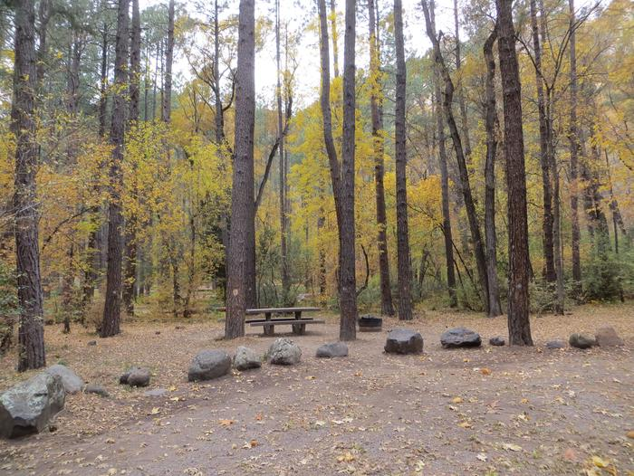 Cave Spring Campground Site #A18 featuring picnic table and fire pit among the trees.
