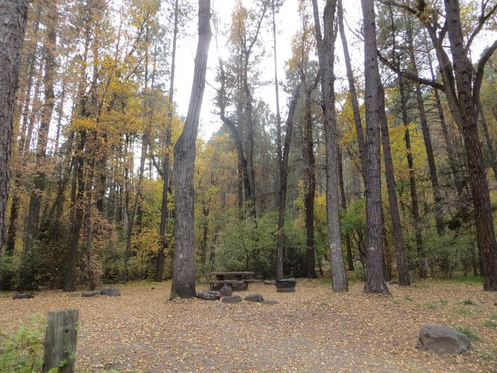 Cave Spring Campground Site #A19 featuring picnic table and fire pit among the trees.