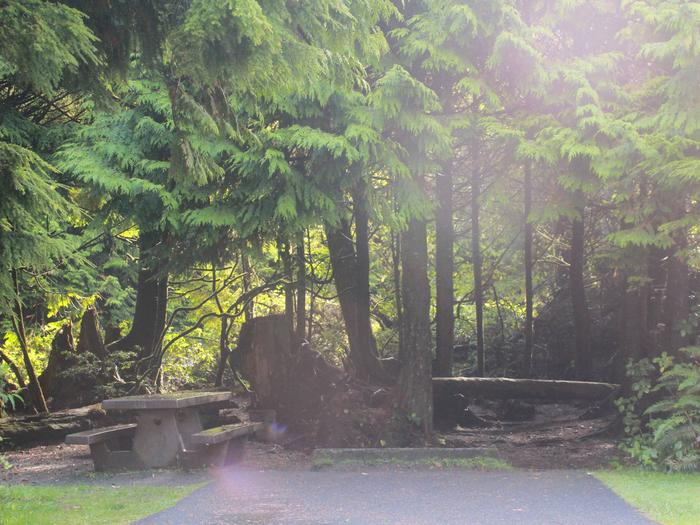 Picture of campsite with picnic tableCampsite D15