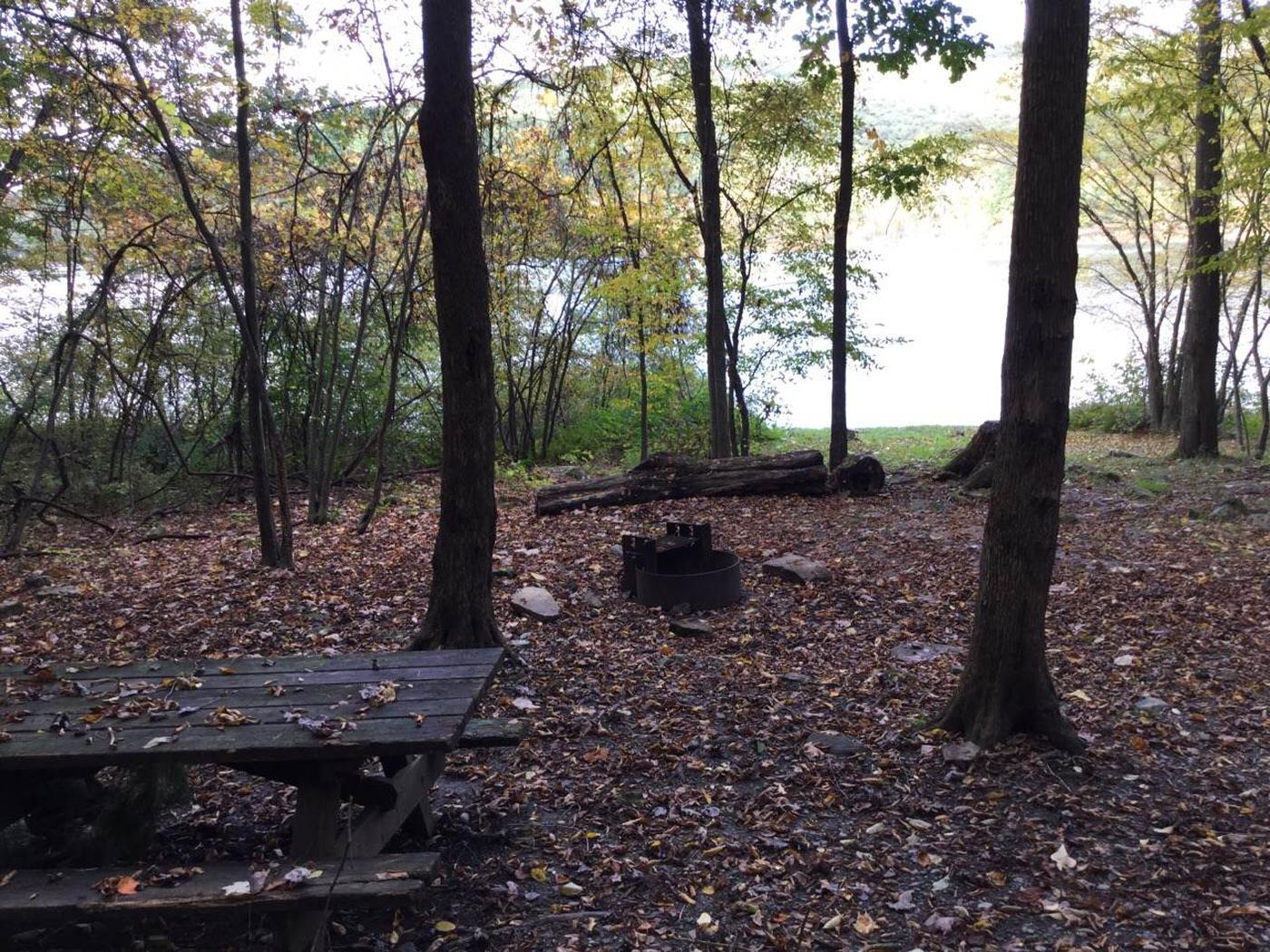 Willow Bay Recreation Area: Site 91