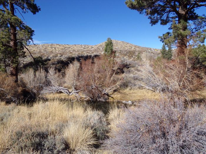 View of creek from the access of site #58, Convict Lake Campground.