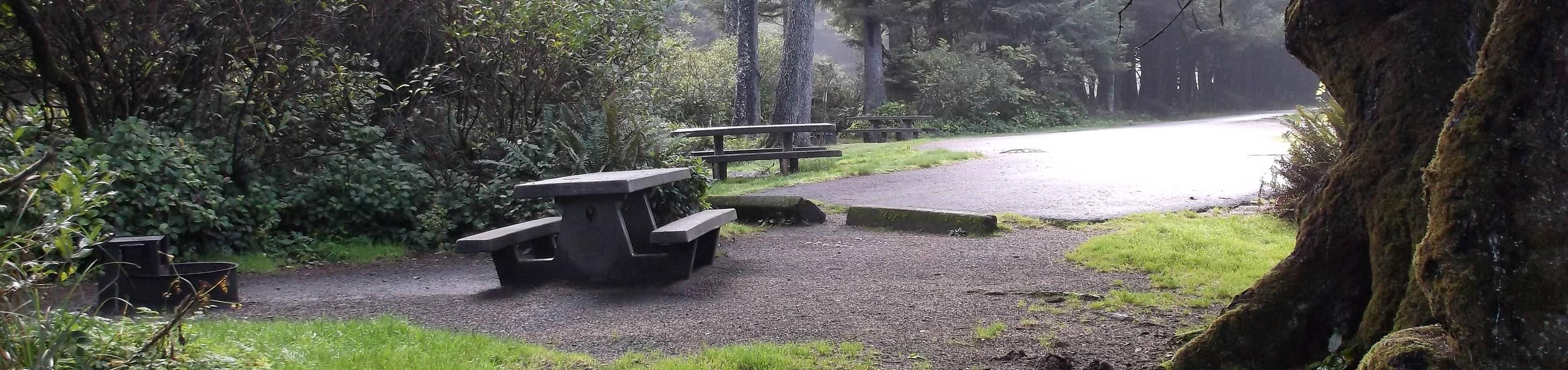Picture of campsite with picnic tableCampsite D23